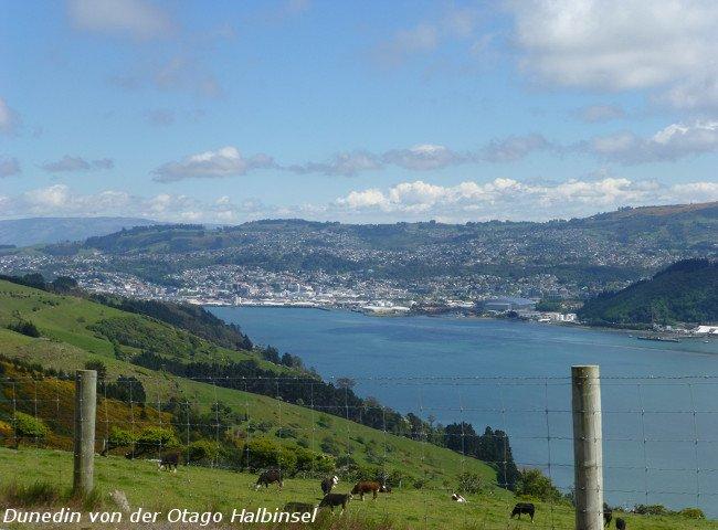 Blick nach Dunedin