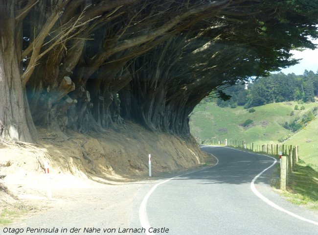 Straße auf der Otago Peninsula