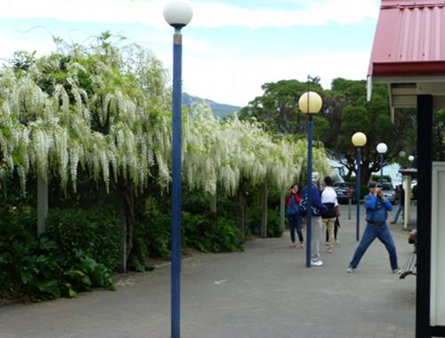 Akaroa im Frühling, November 2014