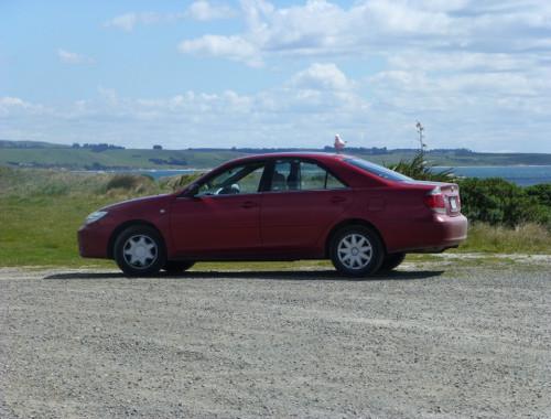 Shagpoint Möwe auf dem Auto