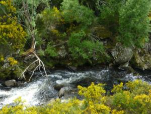 Bachlauf, Trotters Gorge, Neuseeland