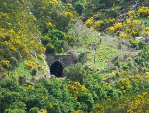 Dunedin. Taeri Gorge, Deep Stream 15