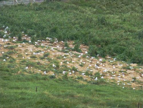 Vogelkolonie am Royal Albatros Center