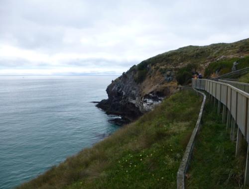 Am Royal Albatros Center Pazifikseite Blick nach Süden