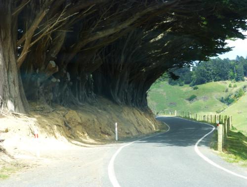 Otago Peninsula zur Sandflybay 2