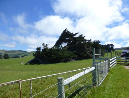 Otago Peninsula an der Sandflybay 3