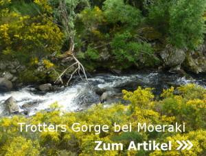 Trotters Gorge bei Moeraki