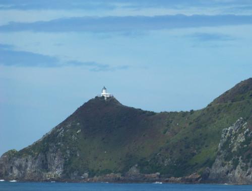 Kaka Point-Ostküste Neuseeland 4