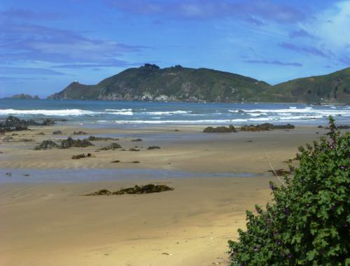 Kaka Point-Ostküste Neuseeland 5