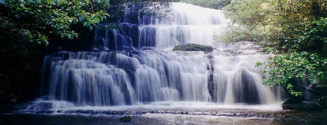 Die Purakaunui Wasserfälle