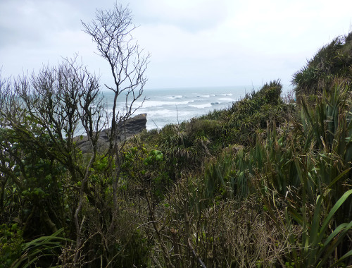 Curio Bay, in den Catlins, Neuseeland