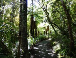 Weg zu den Purakaunui-Falls