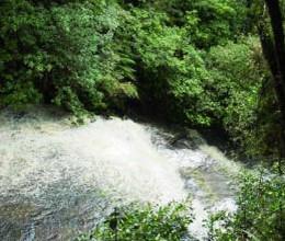 bei den Purakaunui-Falls