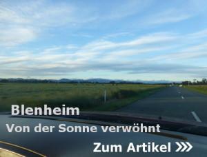 Blenheim, Das Weinbauzentrum der Südinsel Neuseelands