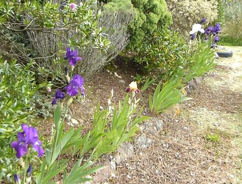 Lignite-Pit Scenic Stop, Garten