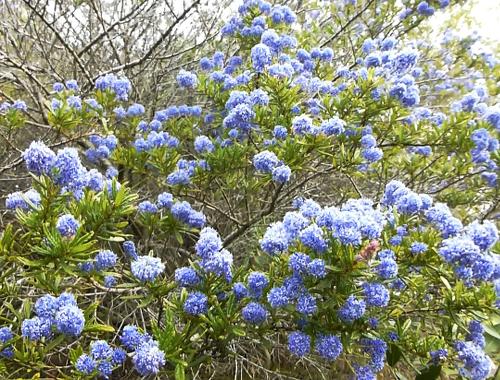 Lignite-Pit Scenic Stop, Garten, Blau blühender Strauch