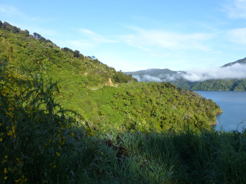 Queen Charlotte Drive, Picton, NZ 9