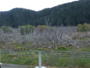 Tuamarina, Picton, Para Sumpf