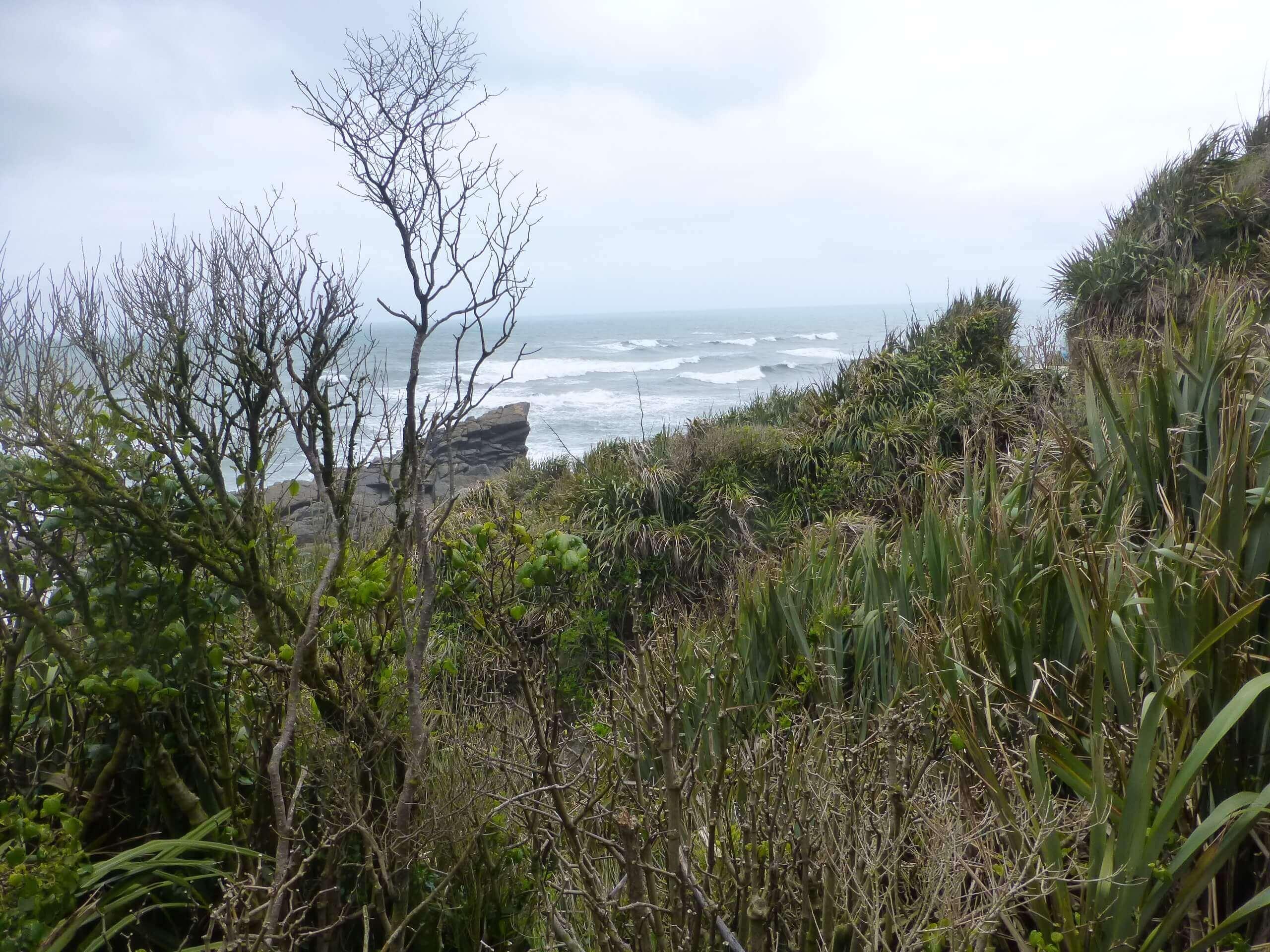 Tauranga Bay, Westküste, NZ 6