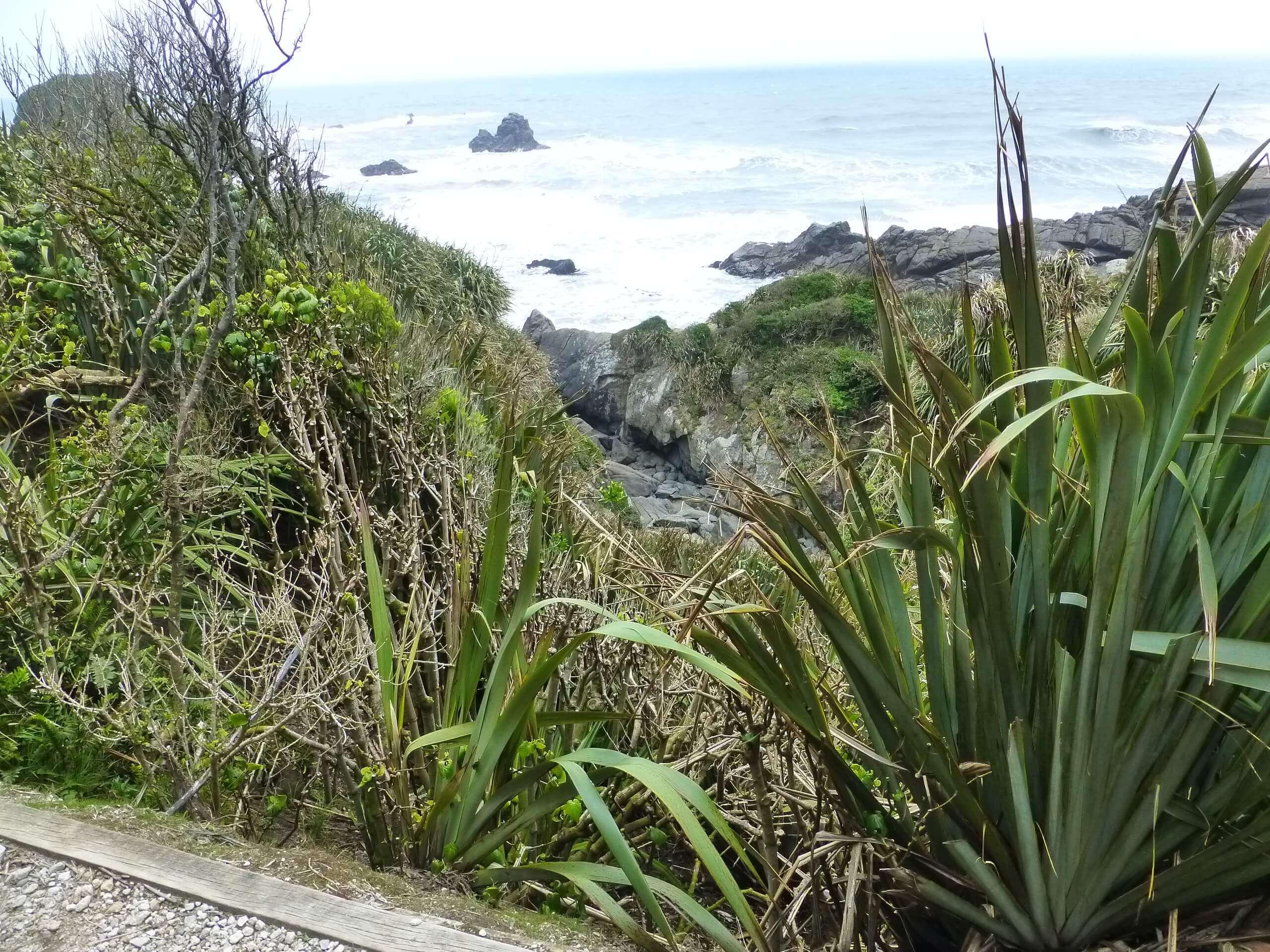 Tauranga Bay, Westküste, NZ 7