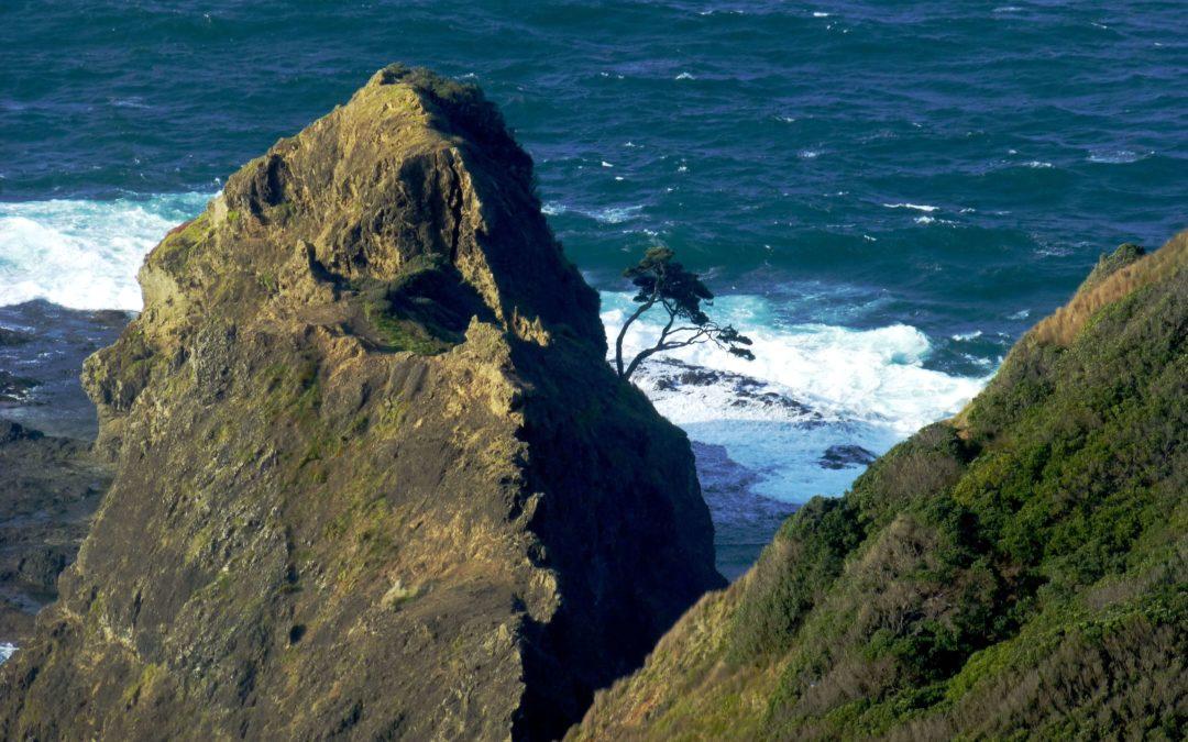 Auf der Nordinsel zum Cape Reinga