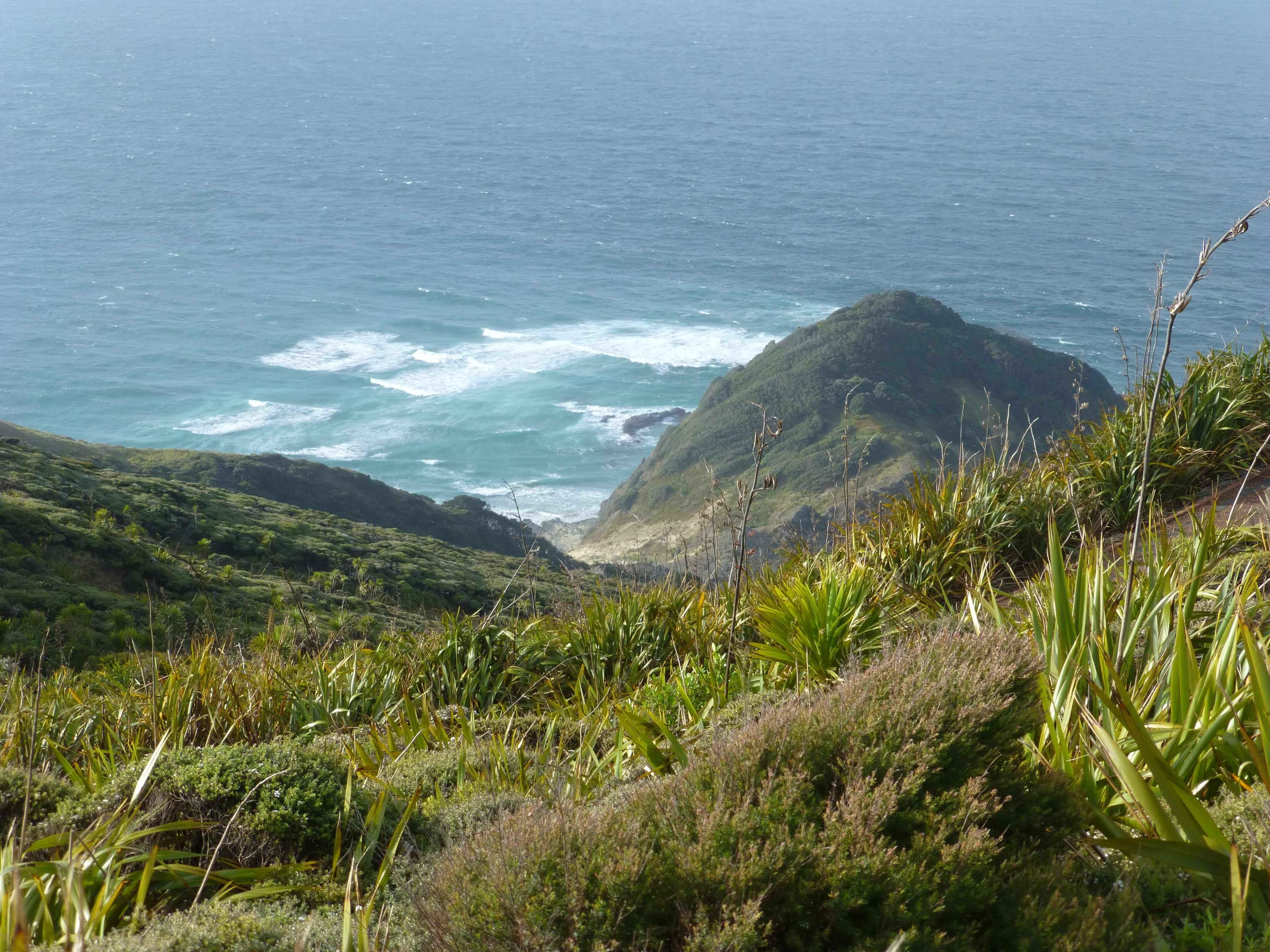 Neuseeland, am Cape Reinga 1