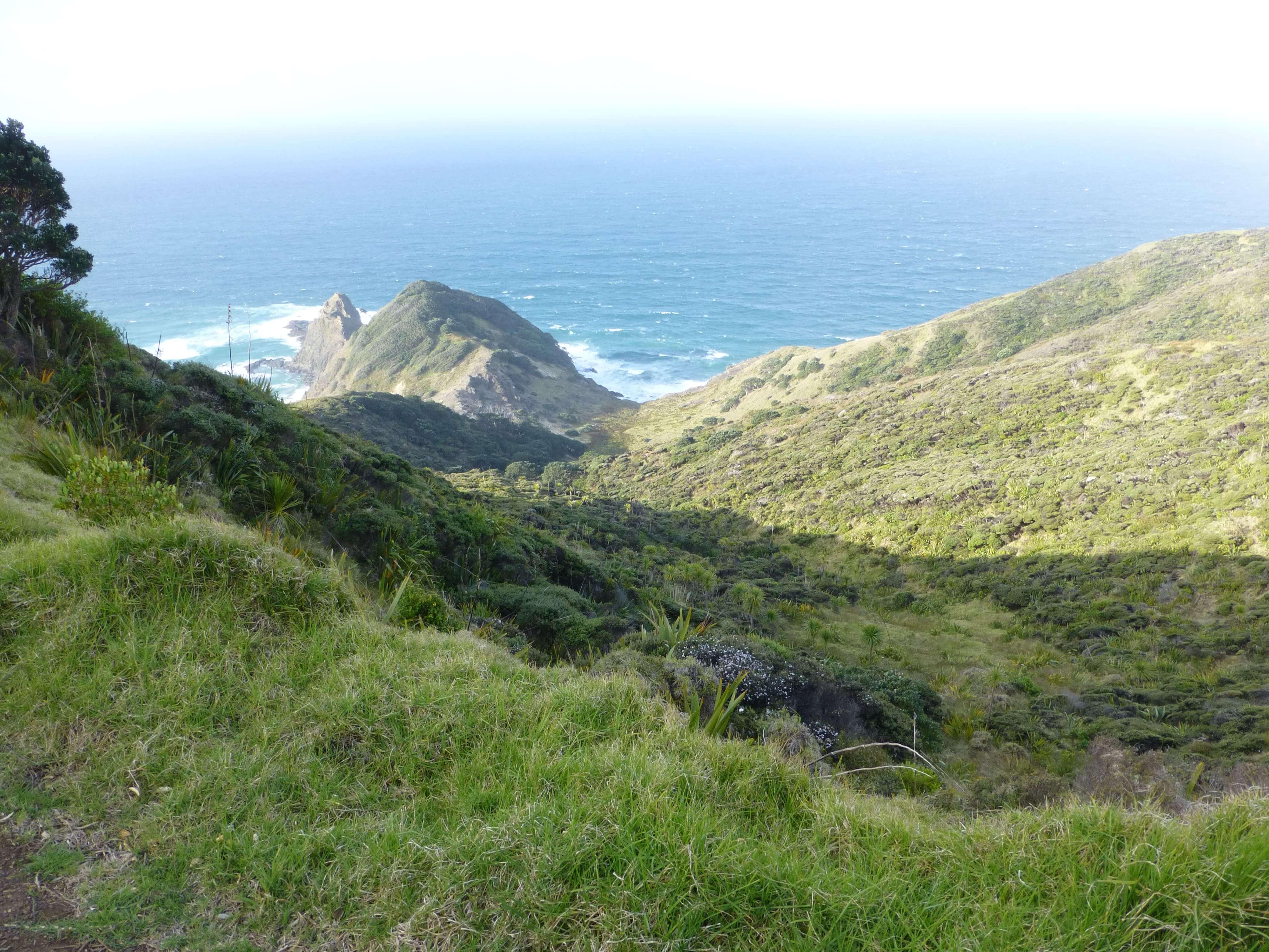 Neuseeland, am Cape Reinga 5