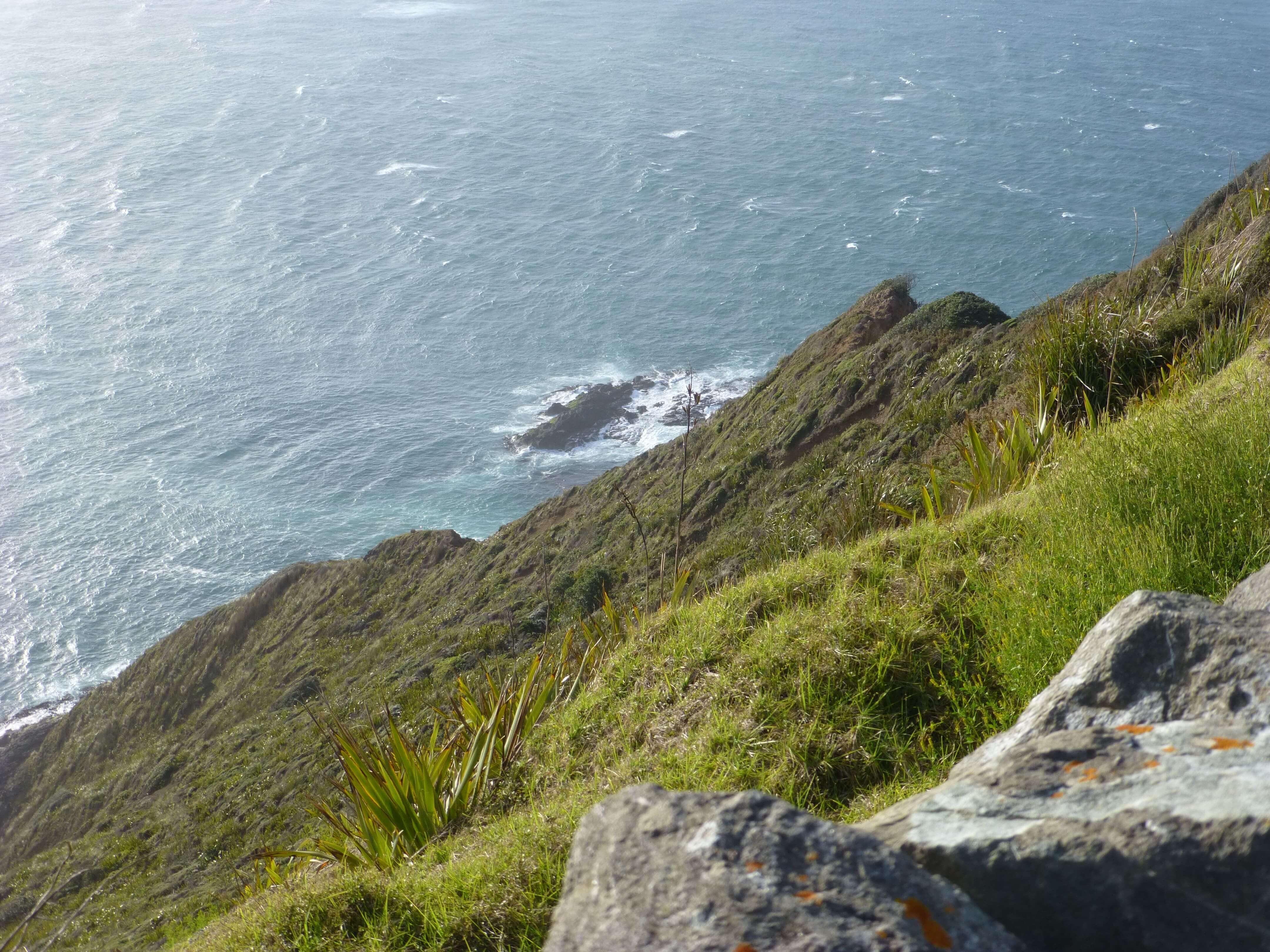 Neuseeland, am Cape Reinga 8