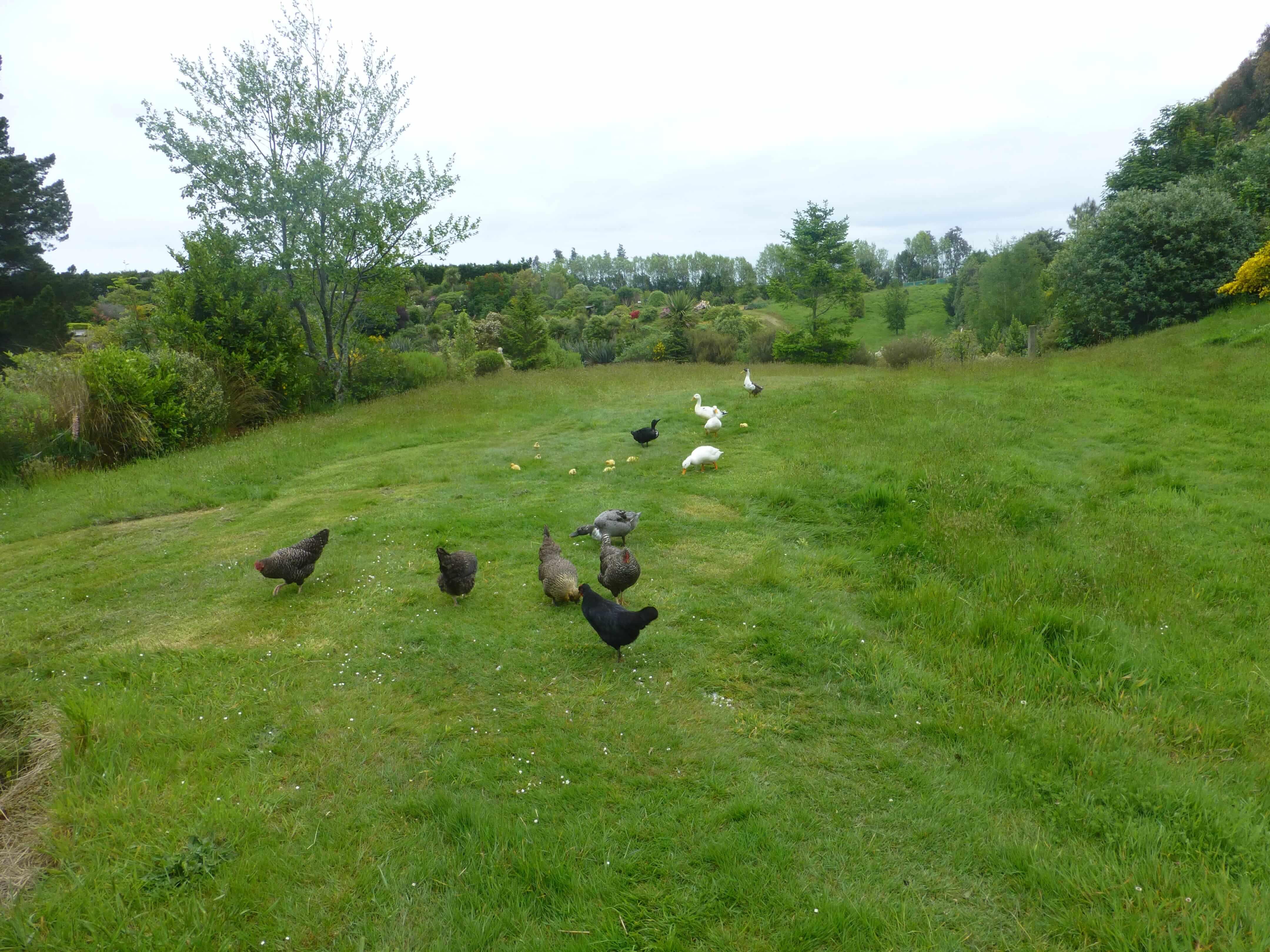 Lignite Pit Secret Garden-weit weg reisen 12