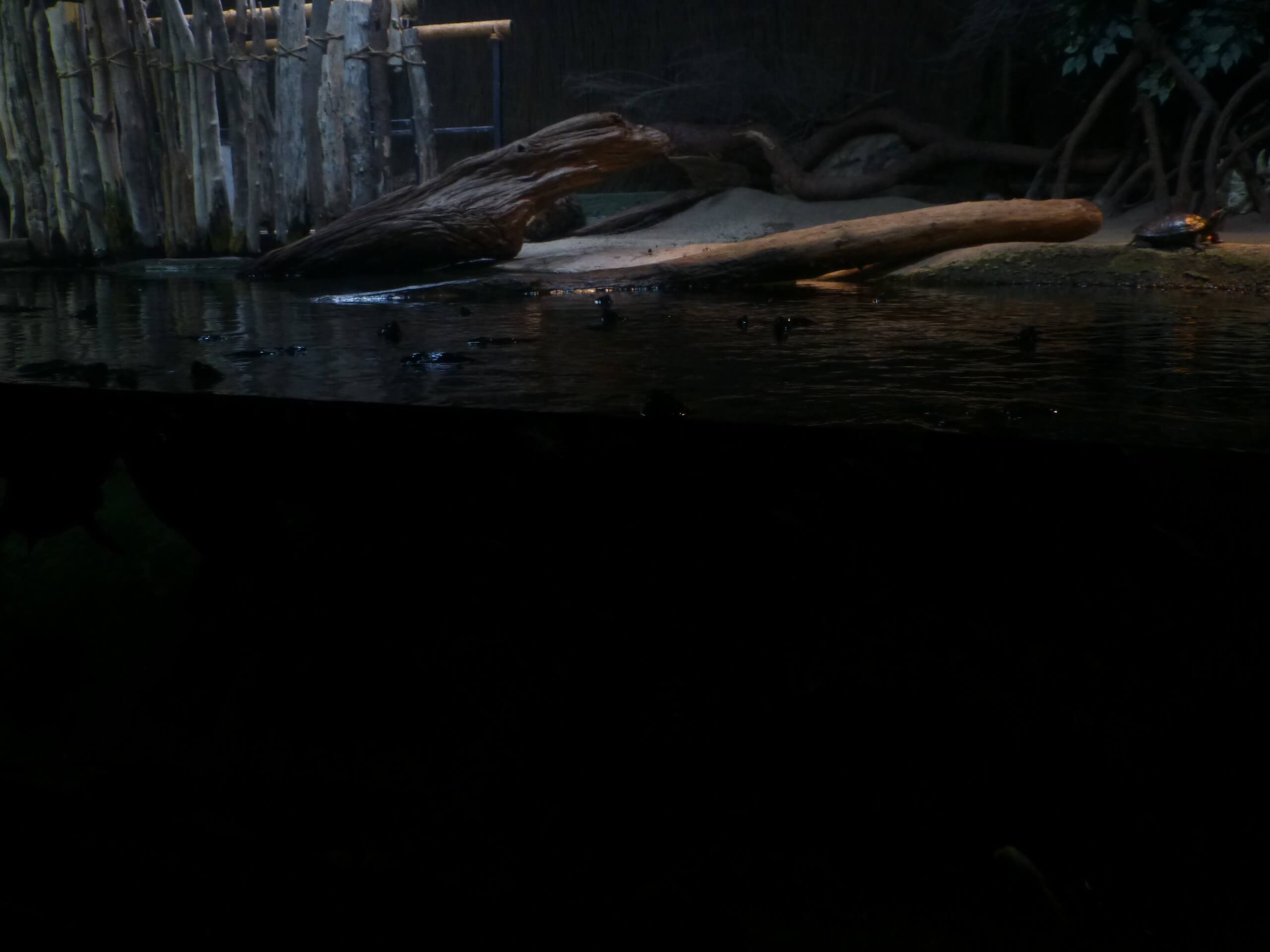 Weit weg Reisen, National Aquarium, Napier 10