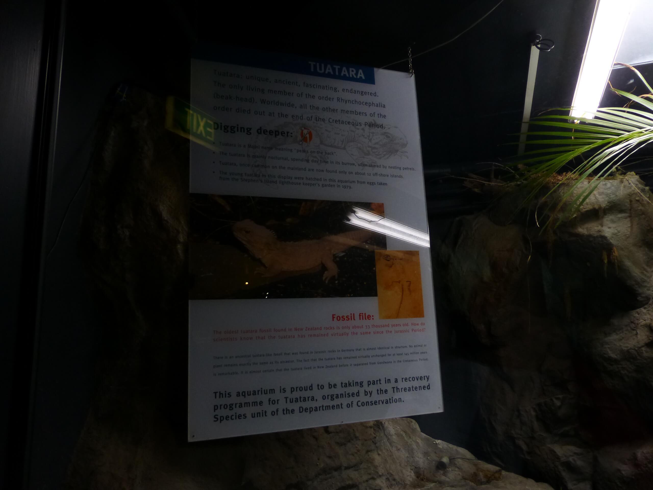 Weit weg Reisen, National Aquarium, Napier 11