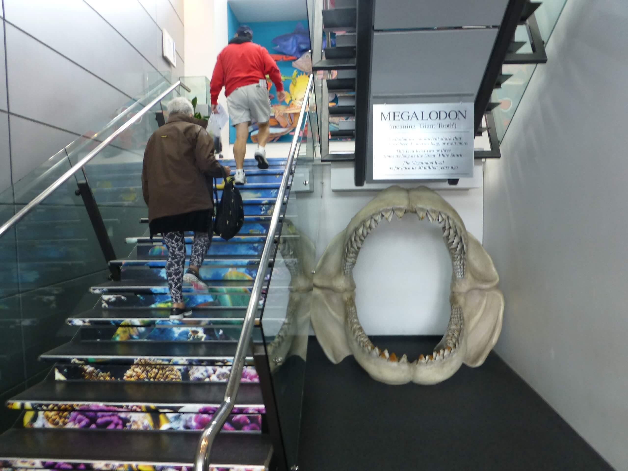 Weit weg Reisen, National Aquarium, Napier 2