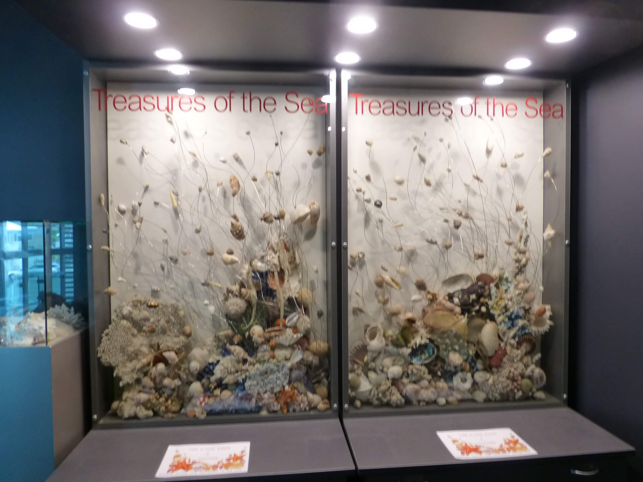 Weit weg Reisen, National Aquarium, Napier 7