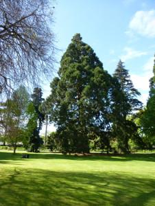 Baumgruppe im botanischen Garten Christchurch