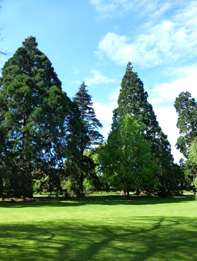 Botanischer Garten Christchurch, Baumgruppe