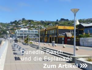 Dunedin Beach an der Esplanade