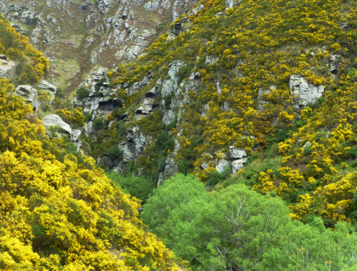 Dunedin. Taeri Gorge, Deep Stream 14