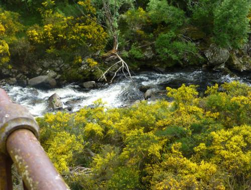 Dunedin. Taeri Gorge, Deep Stream 7