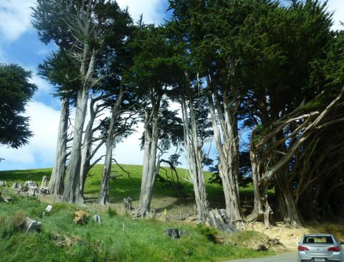 Otago Peninsula zur Sandflybay 1