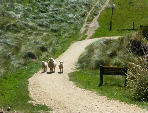Otago Peninsula an der Sandflybay 2
