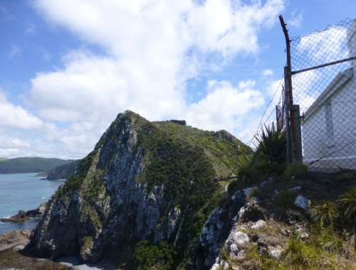 Nugget Point-Südinsel-Ostküste Neuseeland 13