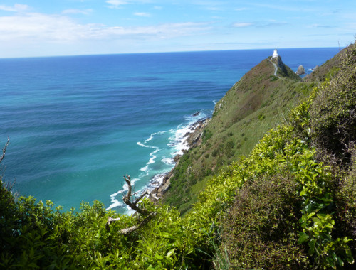 Nugget Point-Südinsel-Ostküste Neuseeland 5
