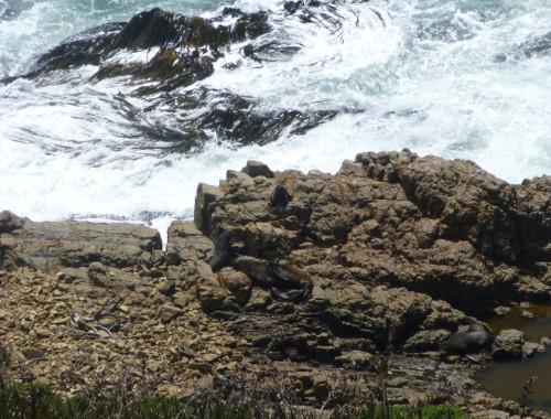 Nugget Point-Südinsel-Ostküste Neuseeland 6