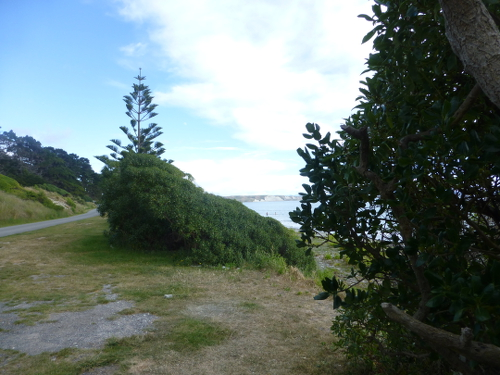 Marfells Beach NZ, am Campingplatz 4