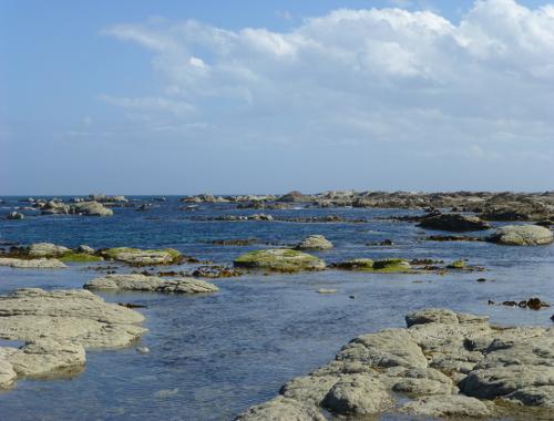 Kaikoura, Point Kean Seal-Colony 12