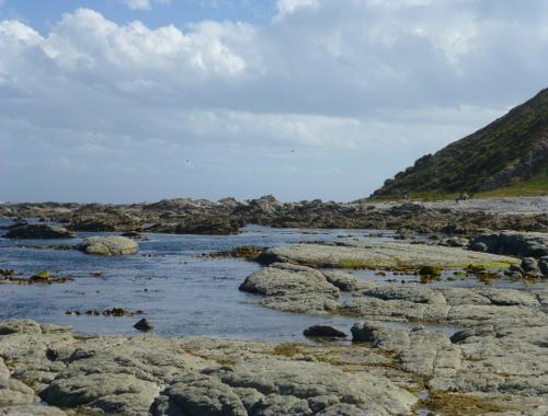 Kaikoura, Point Kean Seal-Colony 13
