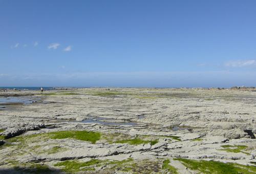 Kaikoura, Point Kean Seal-Colony 2