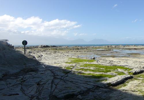 Kaikoura, Point Kean Seal-Colony 3
