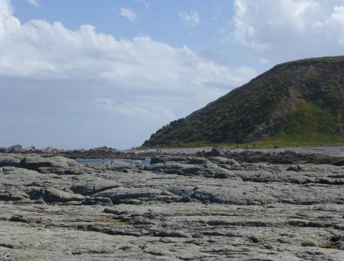 Kaikoura, Point Kean Seal-Colony 6