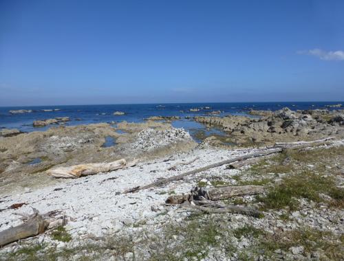 Kaikoura, Point Kean Seal-Colony 8